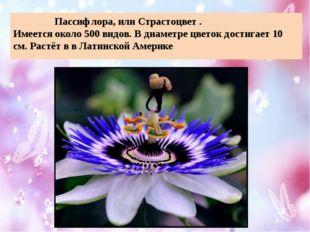 Пассифлора, или Страстоцвет . Имеется около 500 видов. В диаметре цветок дос
