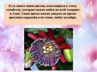 Есть много типов цветов, относящихся к этому семейству, которые можно найти п