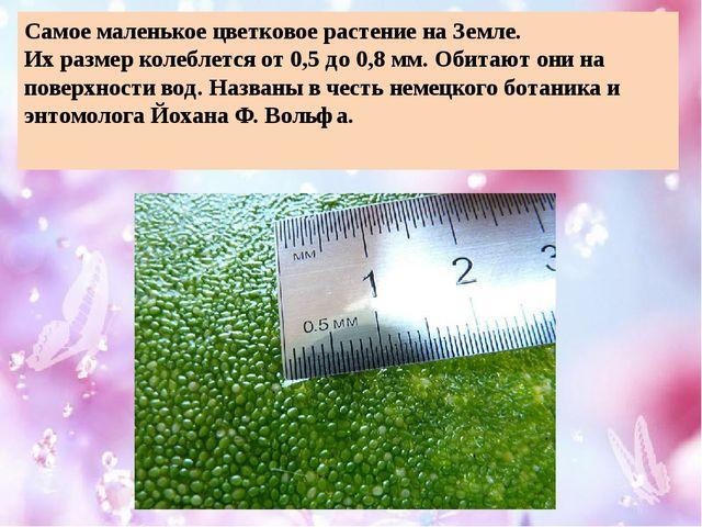 Самое маленькое цветковое растение на Земле. Их размер колеблется от 0,5 до 0...