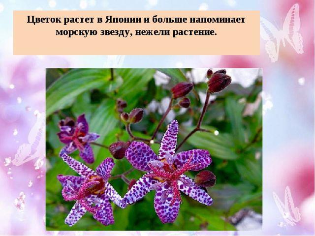Цветок растет в Японии и больше напоминает морскую звезду, нежели растение.