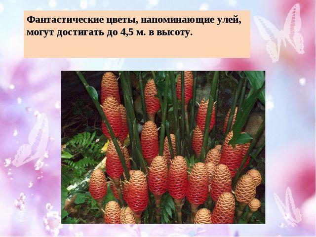 Фантастические цветы, напоминающие улей, могут достигать до 4,5 м. в высоту.