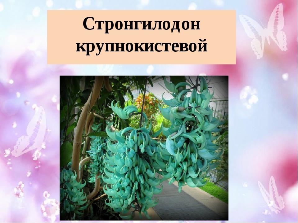 Стронгилодон крупнокистевой