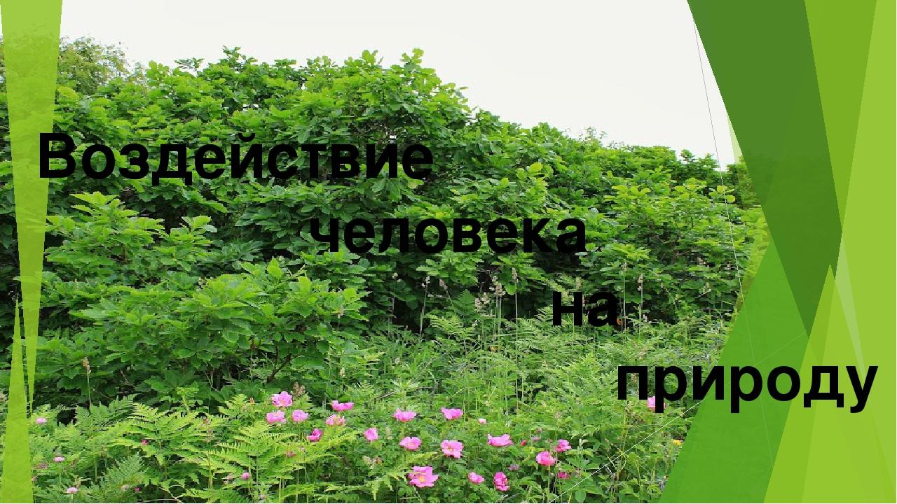 Воздействие человека на природу