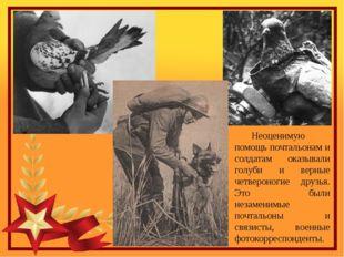 Неоценимую помощь почтальонам и солдатам оказывали голуби и верные четвероно
