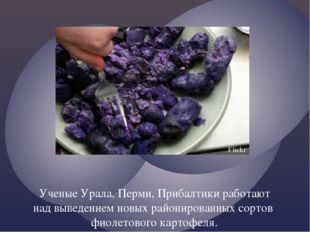 Ученые Урала, Перми, Прибалтики работают над выведением новых районированных
