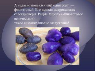 А недавно появился ещё один сорт — фиолетовый. Его вывели американские селекц