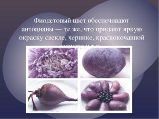 Фиолетовый цвет обеспечивают антоцианы — те же, что придают яркую окраску све