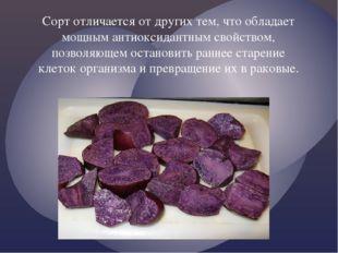Сорт отличается от других тем, что обладает мощным антиоксидантным свойством,