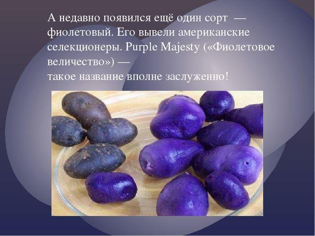 А недавно появился ещё один сорт — фиолетовый. Его вывели американские селекц...