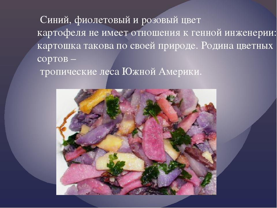 Синий, фиолетовый и розовый цвет картофеля не имеет отношения к генной инжен...