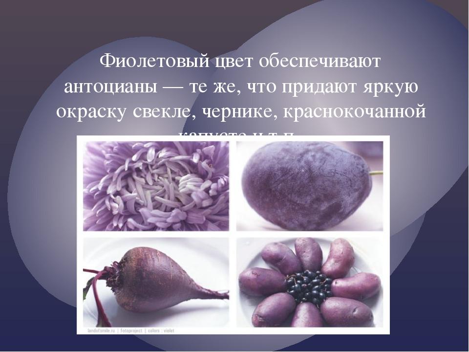 Фиолетовый цвет обеспечивают антоцианы — те же, что придают яркую окраску све...