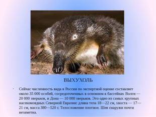 ВЫХУХОЛЬ Сейчас численность вида в России по экспертной оценке составляет око