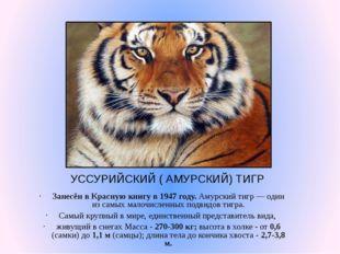 УССУРИЙСКИЙ ( АМУРСКИЙ) ТИГР Занесён в Красную книгу в 1947 году. Амурский ти
