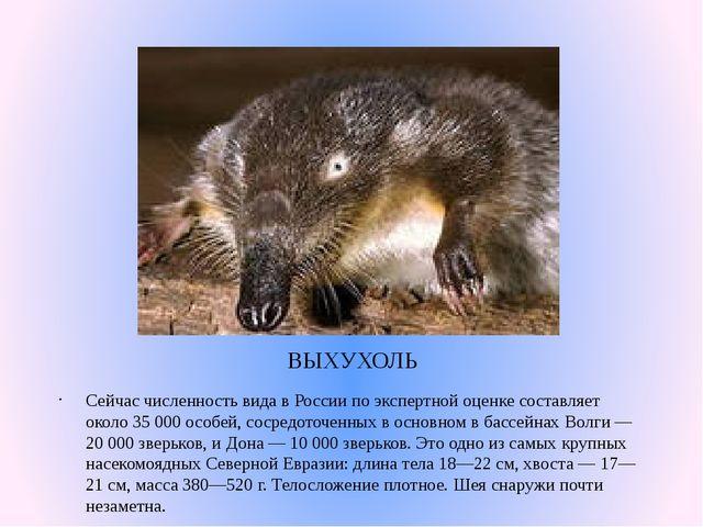 ВЫХУХОЛЬ Сейчас численность вида в России по экспертной оценке составляет око...