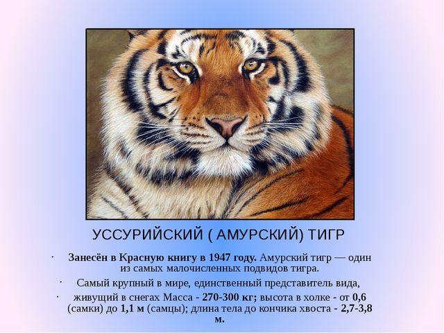 УССУРИЙСКИЙ ( АМУРСКИЙ) ТИГР Занесён в Красную книгу в 1947 году. Амурский ти...
