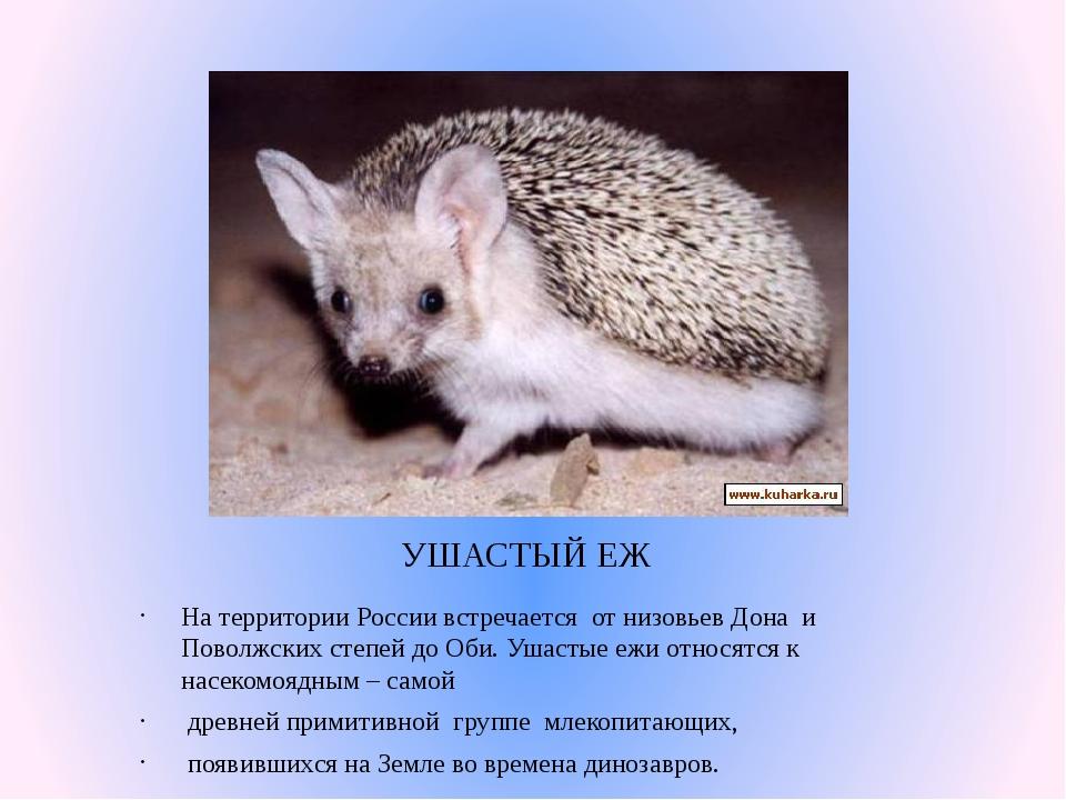 УШАСТЫЙ ЕЖ На территории России встречается от низовьев Дона и Поволжских сте...