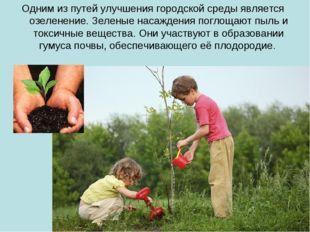 Одним из путей улучшения городской среды является озеленение. Зеленые насажде