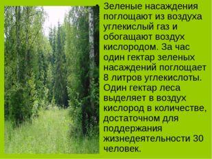 Зеленые насаждения поглощают из воздуха углекислый газ и обогащают воздух кис