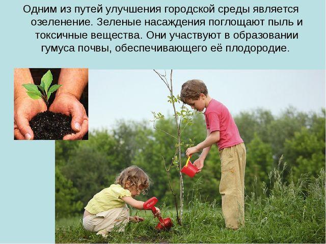 Одним из путей улучшения городской среды является озеленение. Зеленые насажде...