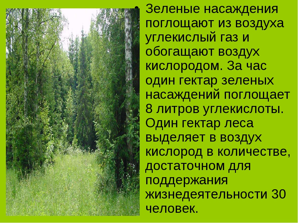 Зеленые насаждения поглощают из воздуха углекислый газ и обогащают воздух кис...