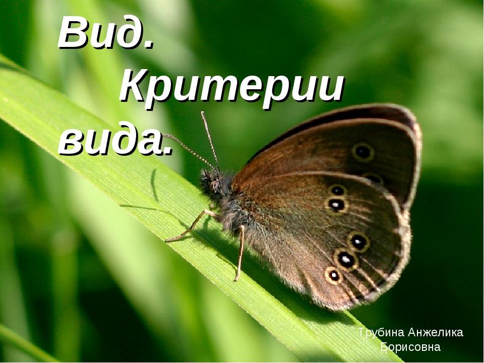 Вид. Критерии вида. Трубина Анжелика Борисовна
