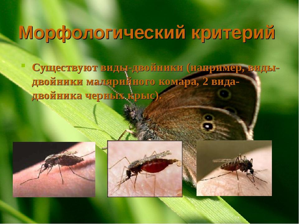 Морфологический критерий Существуют виды-двойники (например, виды-двойники ма...