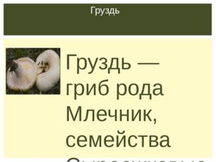 Груздь — гриб рода Млечник, семейства Сыроежковые. Виды груздей многочисленн
