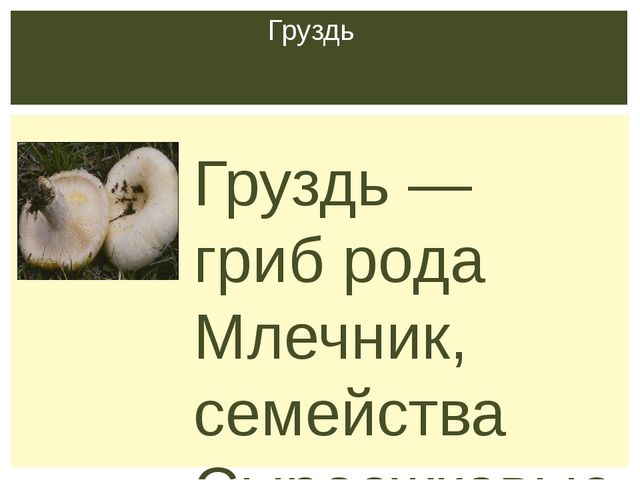 Груздь — гриб рода Млечник, семейства Сыроежковые. Виды груздей многочисленн...