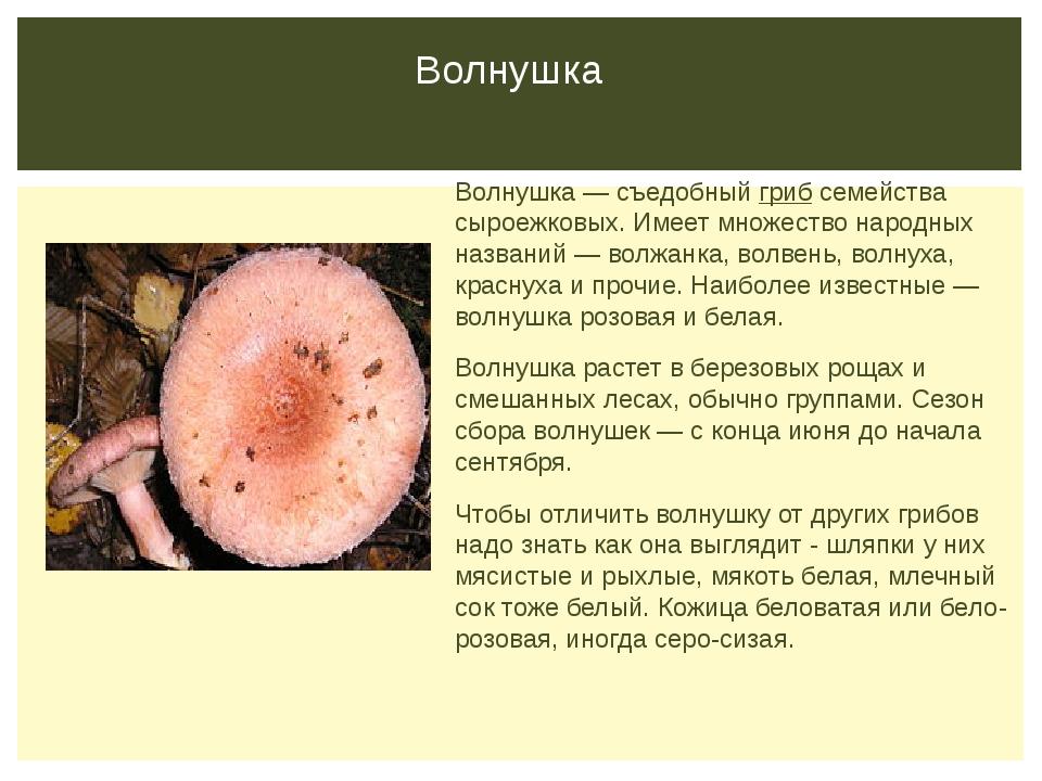Волнушка Волнушка — съедобныйгрибсемейства сыроежковых. Имеет множество нар...