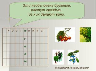 Эти ягоды очень дружные, растут гроздью, из них делают вино. костяник