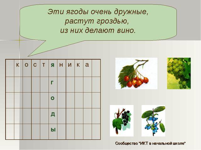 Эти ягоды очень дружные, растут гроздью, из них делают вино. костяник...