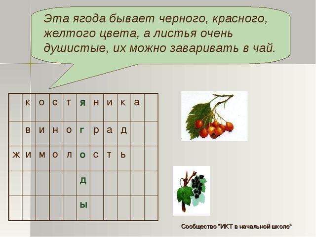 Эта ягода бывает черного, красного, желтого цвета, а листья очень душистые, и...