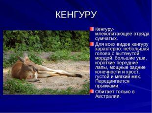 КЕНГУРУ Кенгуру-млекопитающее отряда сумчатых. Для всех видов кенгуру характе