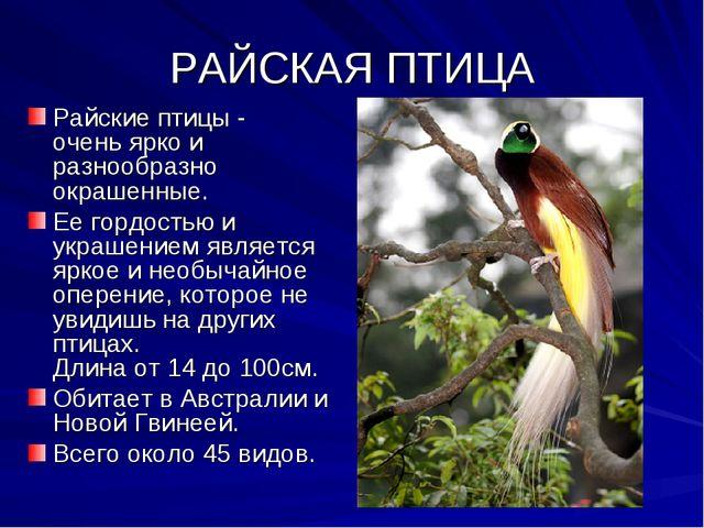 РАЙСКАЯ ПТИЦА Райские птицы - очень ярко и разнообразно окрашенные. Ее гордос...