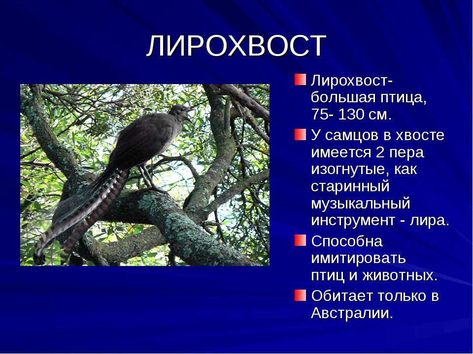 ЛИРОХВОСТ Лирохвост- большая птица, 75- 130 см. У самцов в хвосте имеется 2 п...