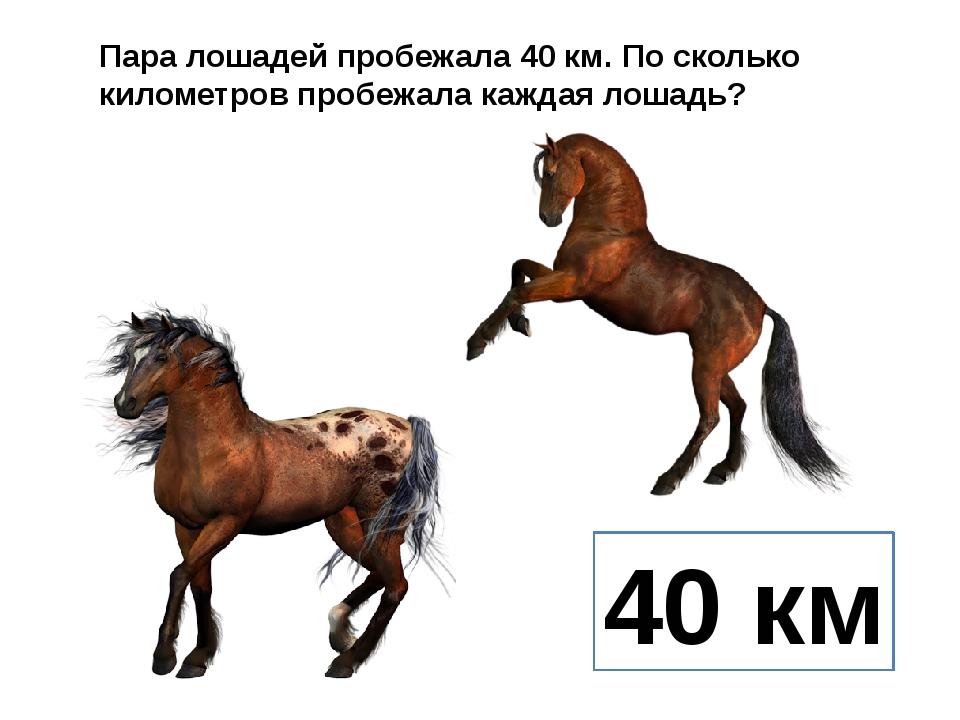 Пара лошадей пробежала 40 км. По сколько километров пробежала каждая лошадь?...
