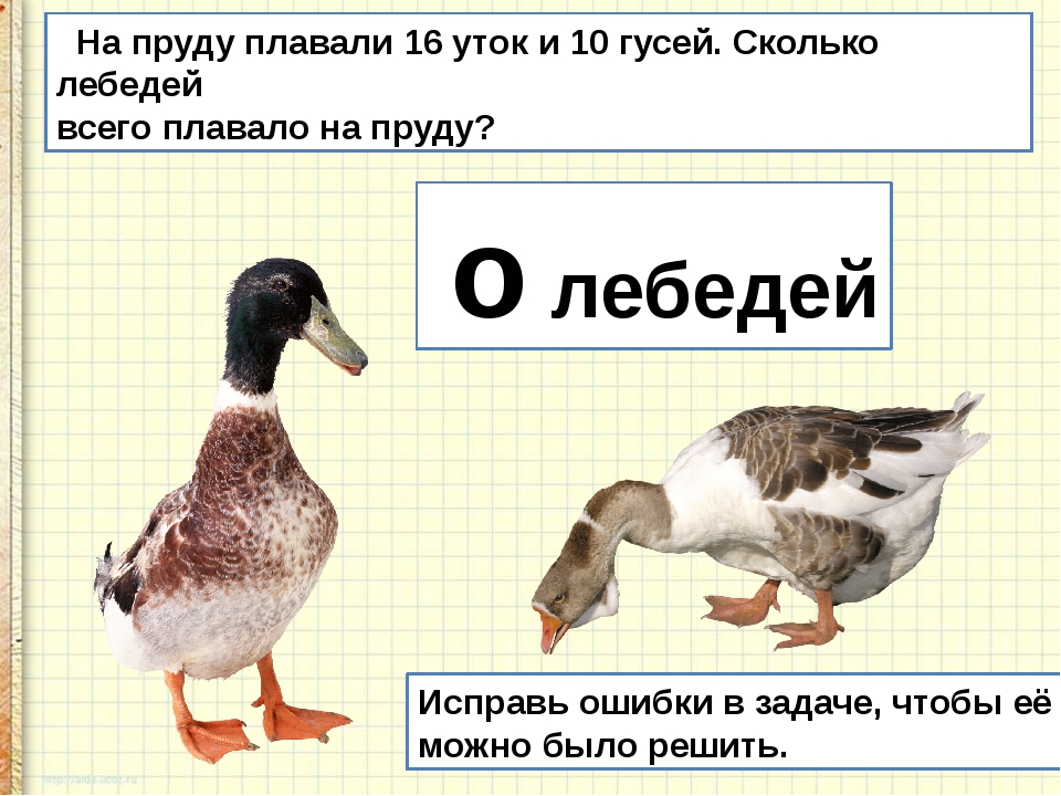 На пруду плавали 16 уток и 10 гусей. Сколько лебедей всего плавало на пруду?...
