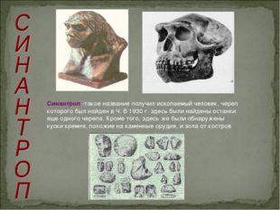 Синантроп -такое название получил ископаемый человек, череп которого был найд