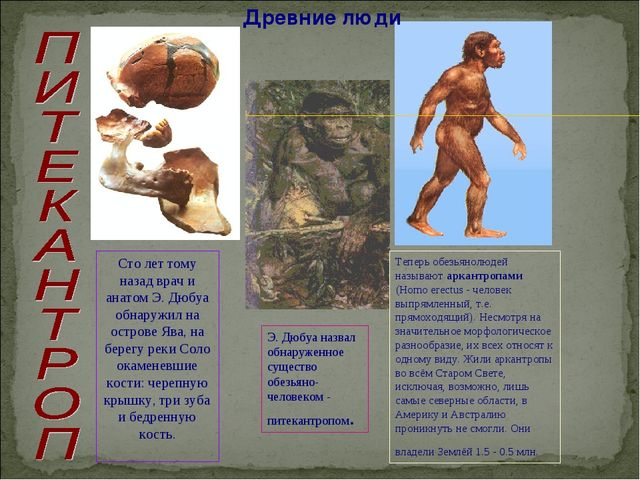 Древние люди Сто лет тому назад врач и анатом Э. Дюбуа обнаружил на острове Я...