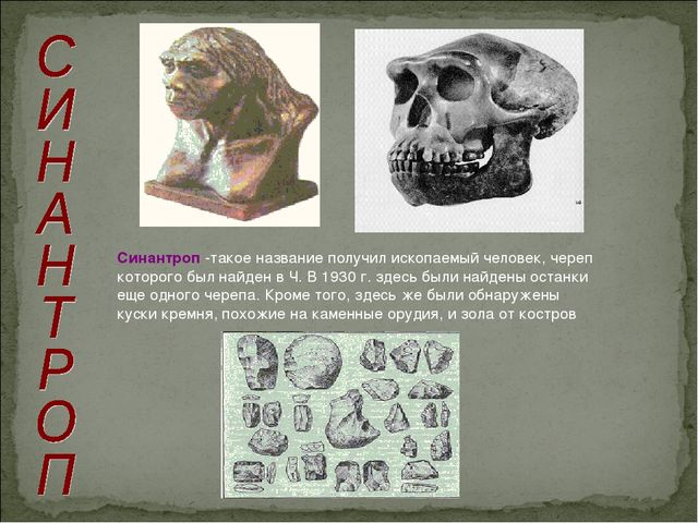 Синантроп -такое название получил ископаемый человек, череп которого был найд...