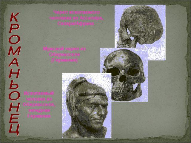 Ископаемый человек из Оберкасселя, западная Германия Череп ископаемого челове...