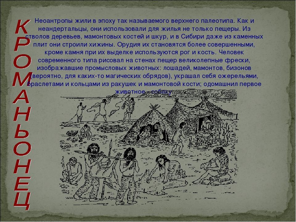 Неоантропы жили в эпоху так называемого верхнего палеотипа. Как и неандерталь...