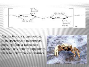 Хитин близок к целлюлозе; он встречается у некоторых форм грибов, а также ка