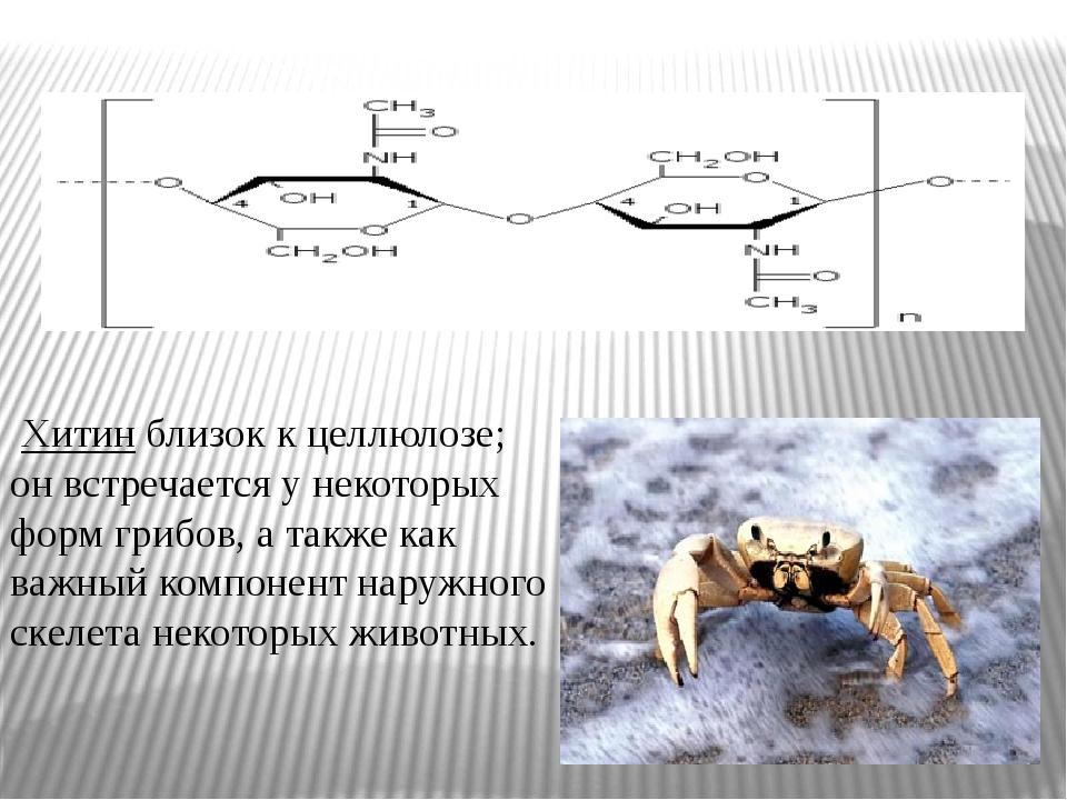 Хитин близок к целлюлозе; он встречается у некоторых форм грибов, а также ка...