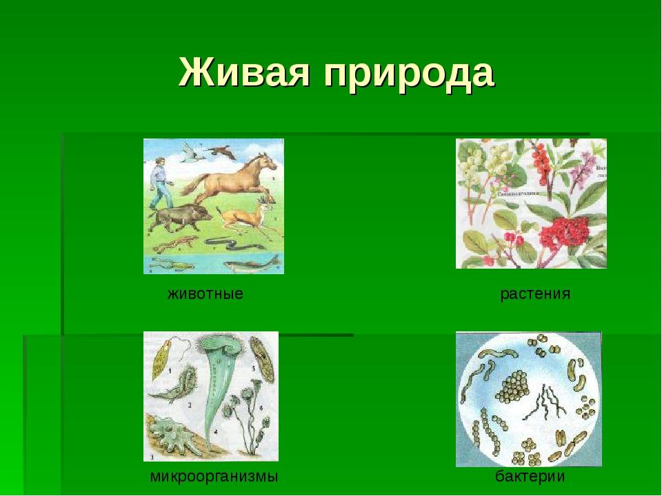 Живая природа животные растения микроорганизмы бактерии