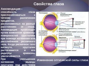 Аккомодация– способность глаза приспосабливаться к четкому различению предме