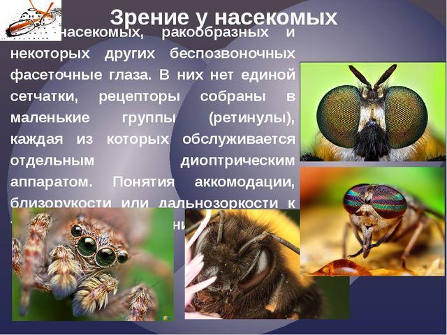 у насекомых, ракообразных и некоторых других беспозвоночных фасеточные глаза...