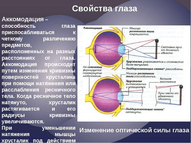 Аккомодация– способность глаза приспосабливаться к четкому различению предме...