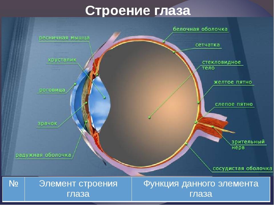 Строение глаза № Элемент строения глаза Функция данного элемента глаза