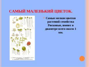 САМЫЙ МАЛЕНЬКИЙ ЦВЕТОК. Самые мелкие цветки растений семейства Рясковые, имею
